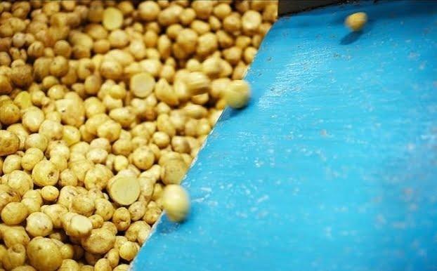 small potato chips plant process